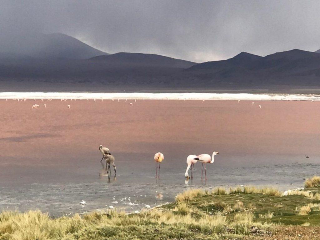 Roze meer in San Pedro d'Atacama