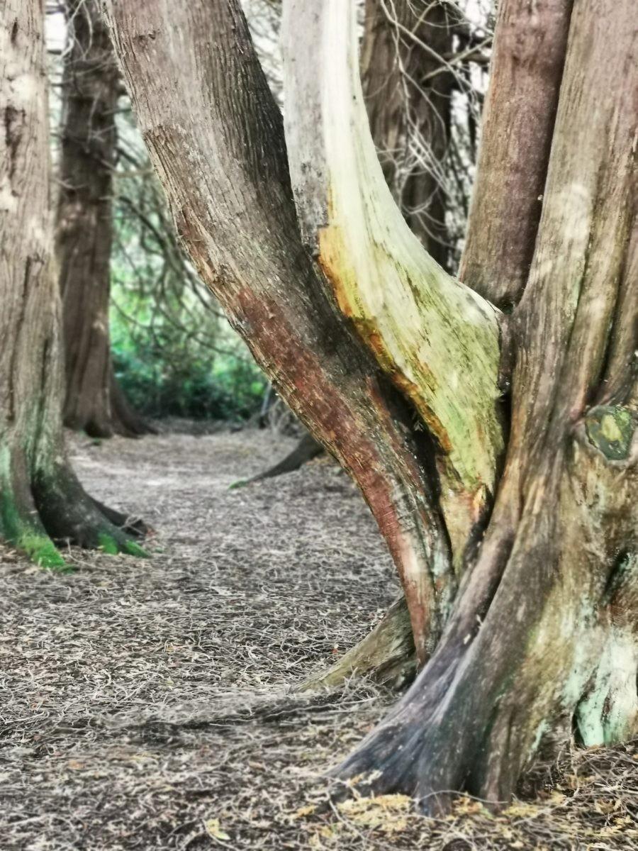Eeuwenoude bomen, Irelands Hidden Heartlands