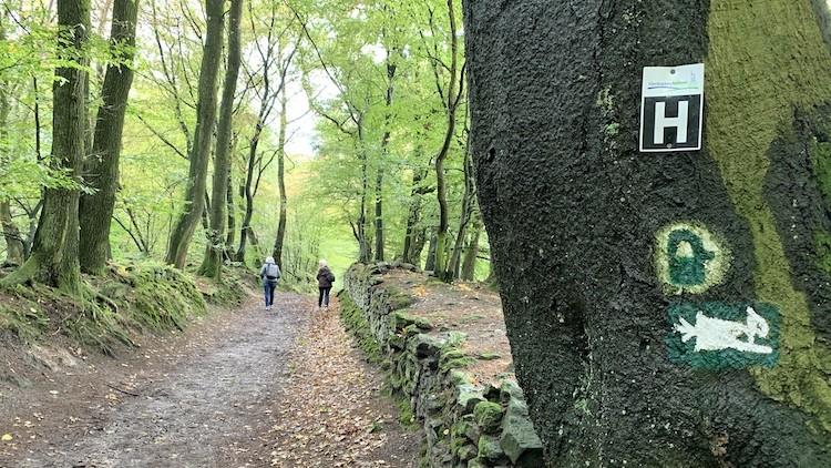 De groene Hermannsweg. Foto: Dagmar Wolters
