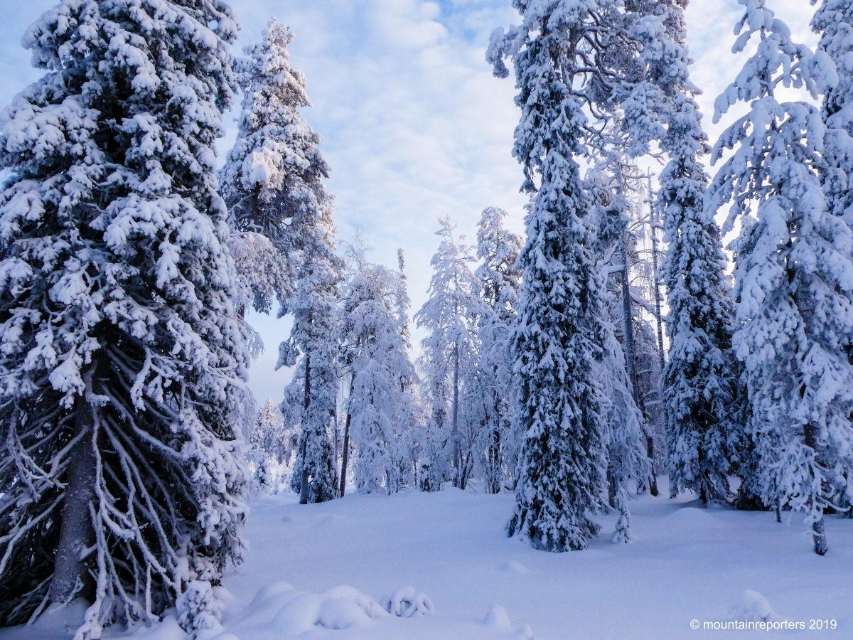 Wandelen door het bos in Fins Lapland. Foto: Edwin Hagenouw