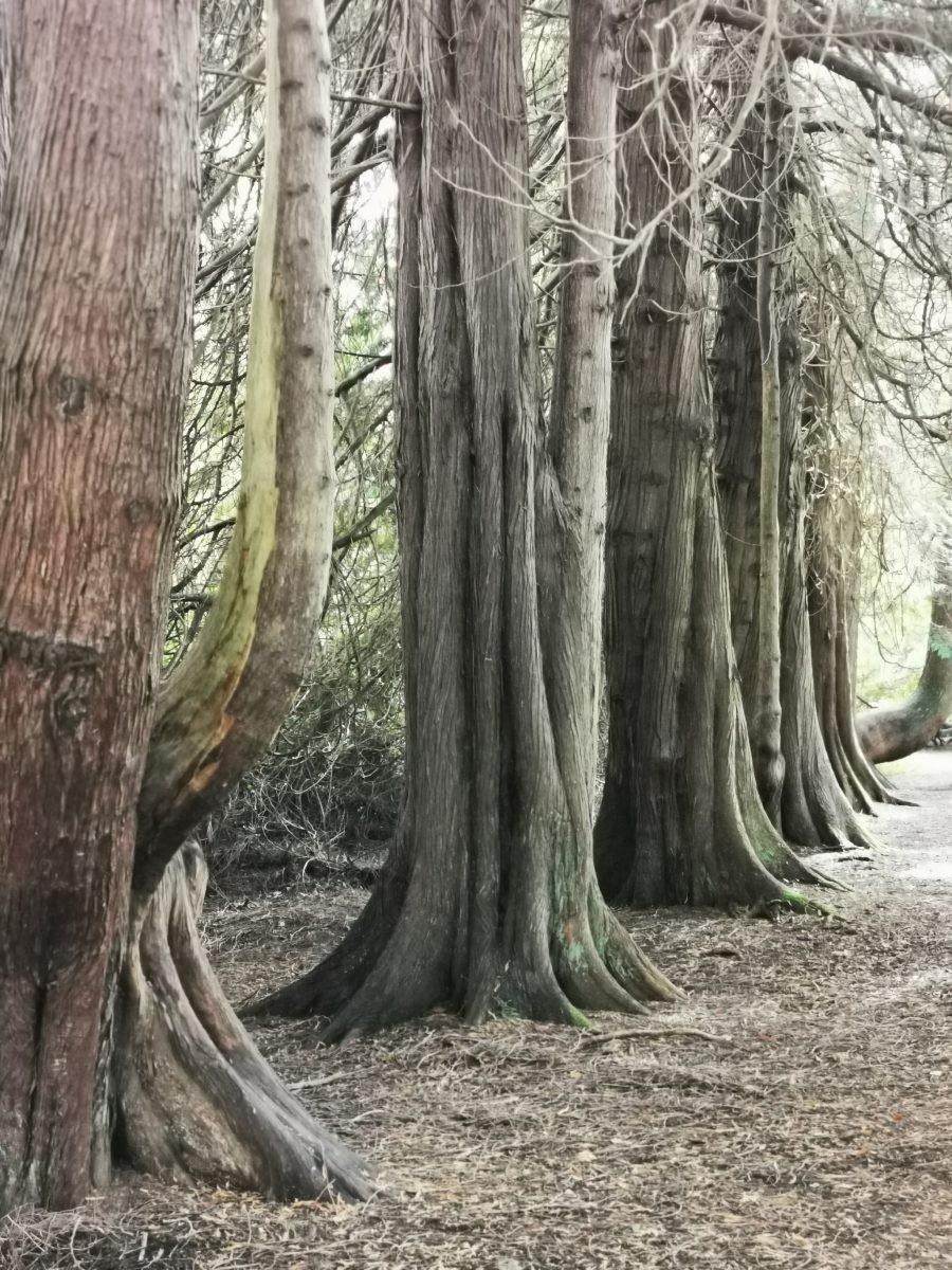 200 jaar oude bomen