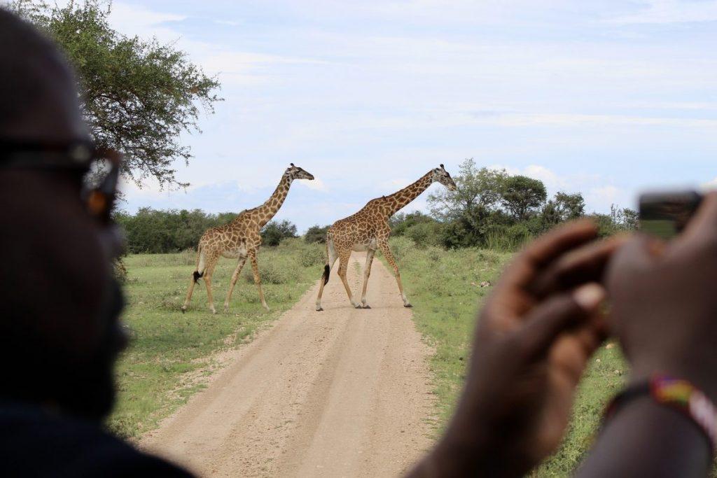 Giraffen steken vlak achter ons over. Foto: Pauline van der Waal