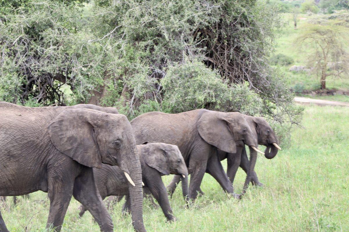Olifantenfamilie aan de wandel. Foto: Pauline van der Waal