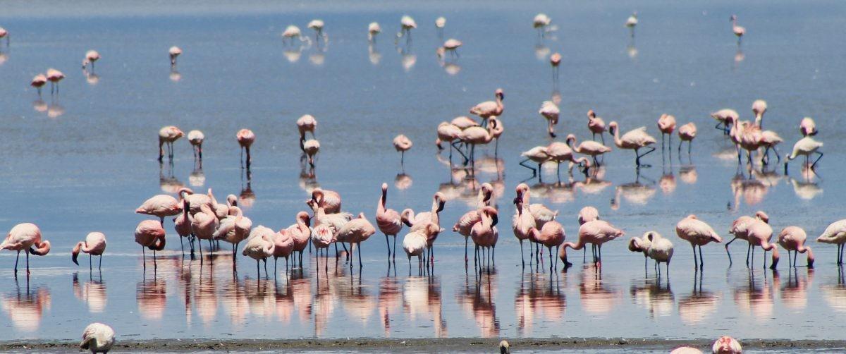 Overal flamingo's! Foto: Pauline van der Waal