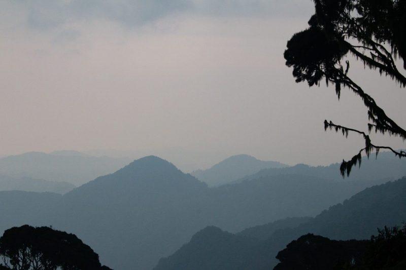 Tropisch regenwoud Rwenzori