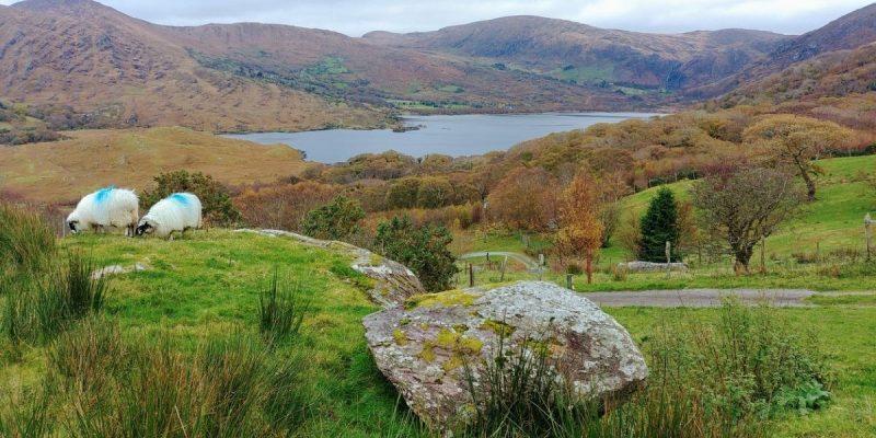 Fotoverslag Zuidwest-Ierland