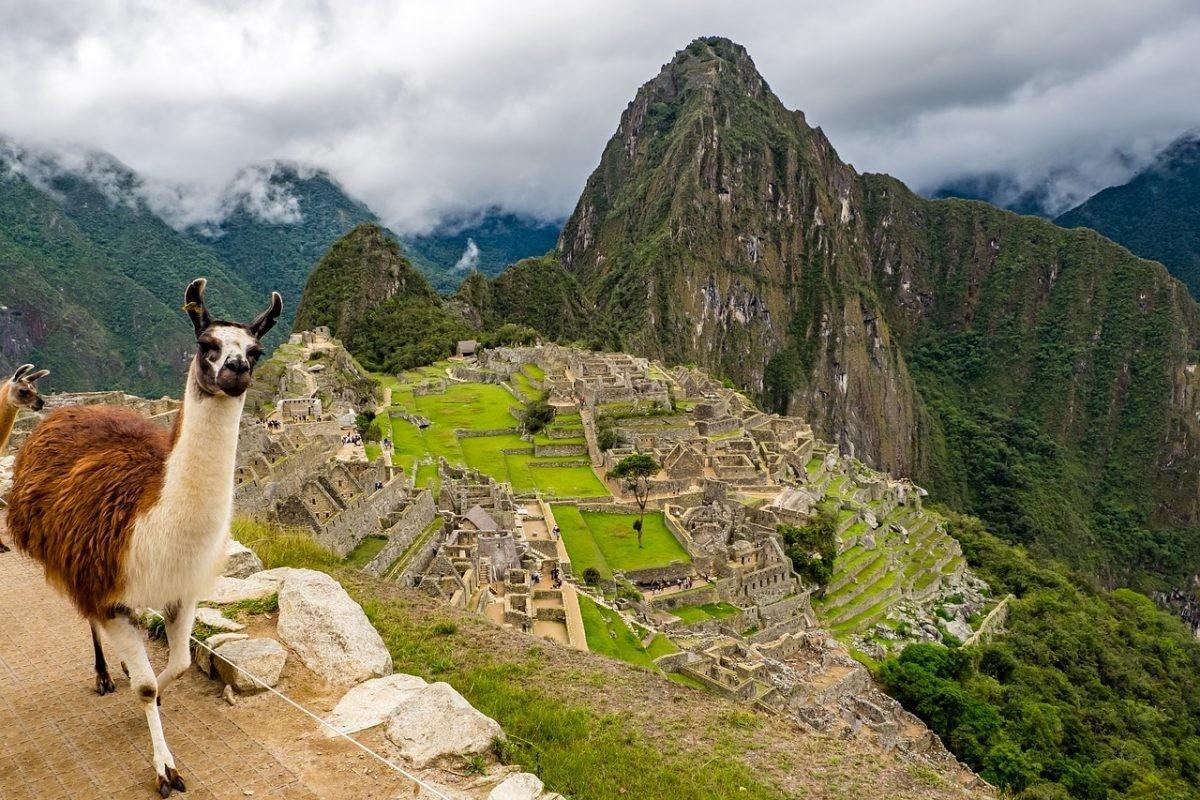 Zonder lama is Machu PIcchu niet compleet. Foto: Pixabay