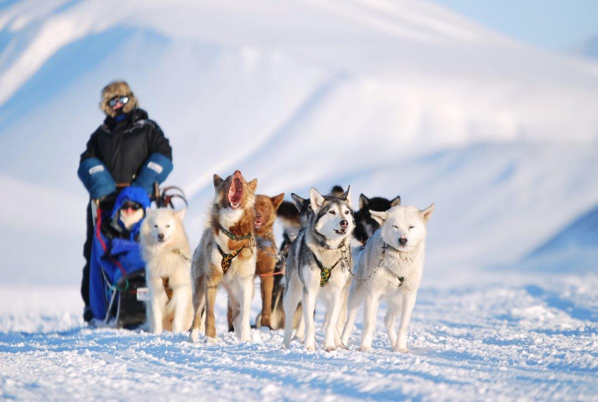Een tocht met de hondenslee is een absolute must. Foto: Askja Reizen