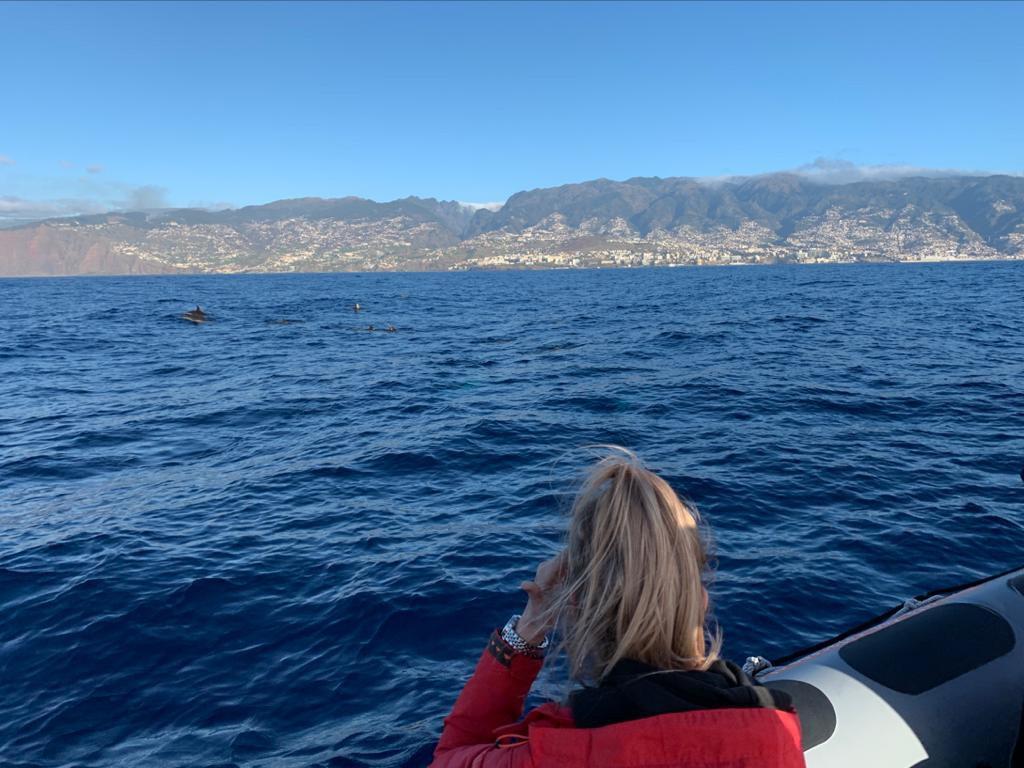 Dolfijnen spotten op Madeira, fotocredits: reislegende