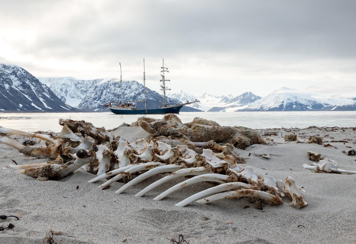 Restanten van een hard leven zo ver in het noorden. Foto: Askja Reizen