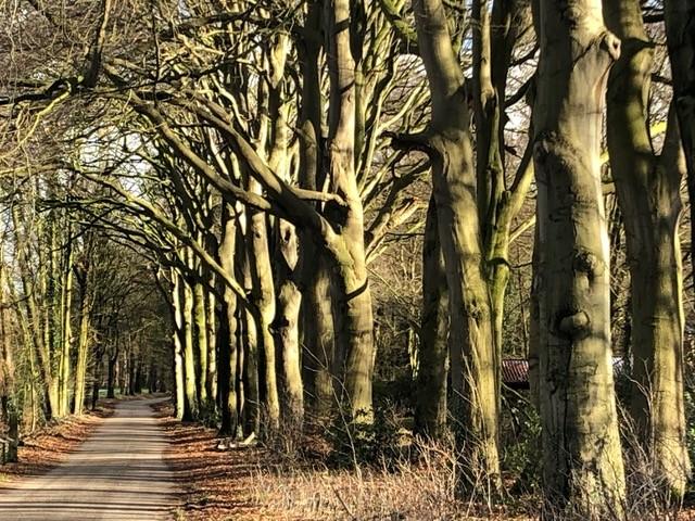 Wandelen in het hart van Nederland
