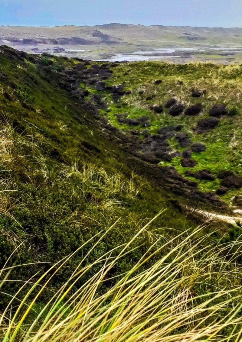 Uitzicht over de duinen
