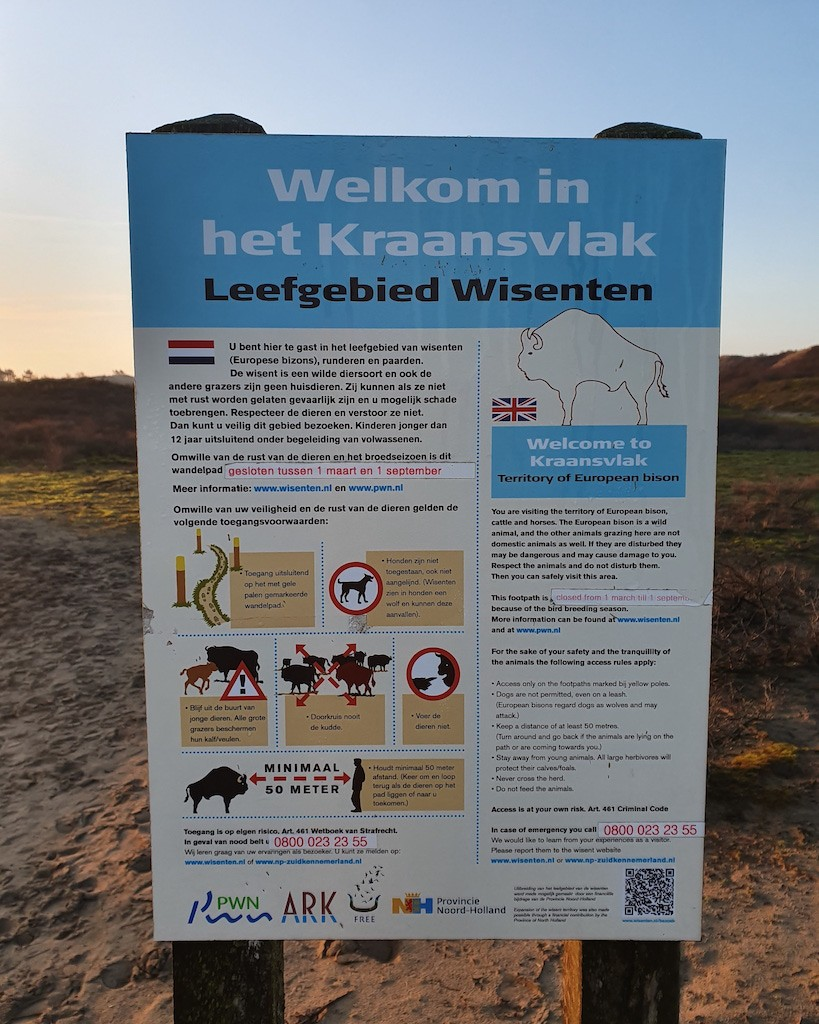 wisenten in Nederland