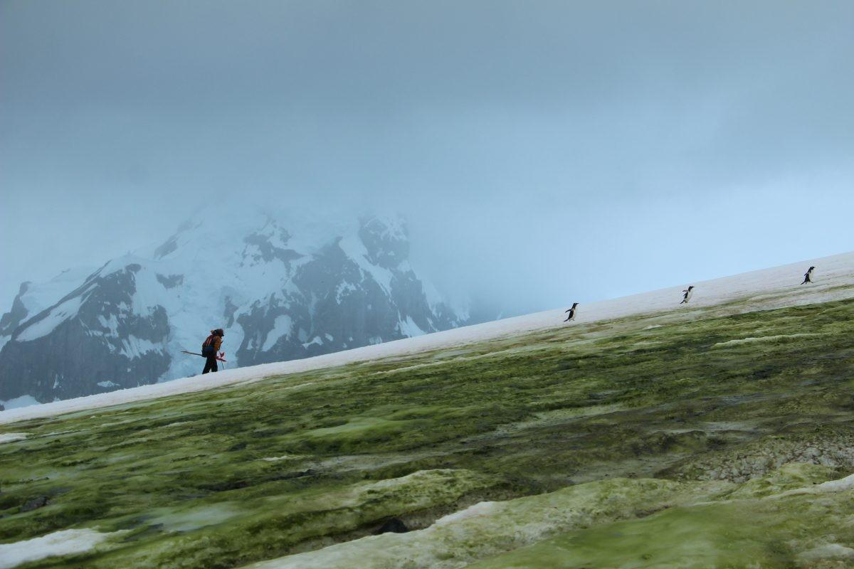 temperatuur op Antarctica
