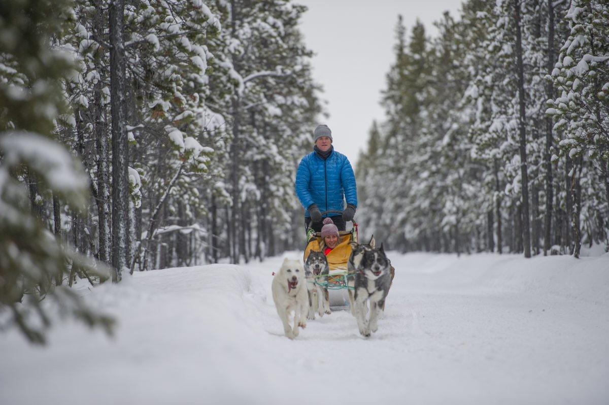 In volle vaart met de hondenslee in de buurt van ANnie Lake. Foto: YG/Cathie Archbould © Government of Yukon