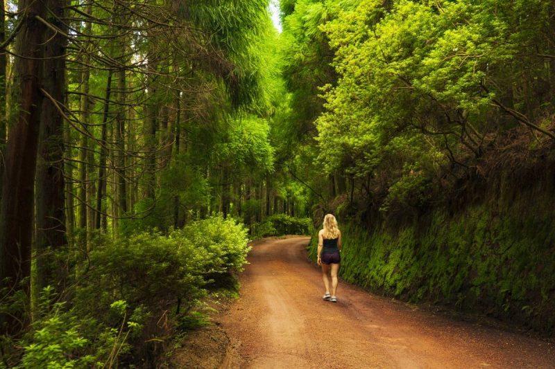 Wandelen door de bossen van Sao Miguel