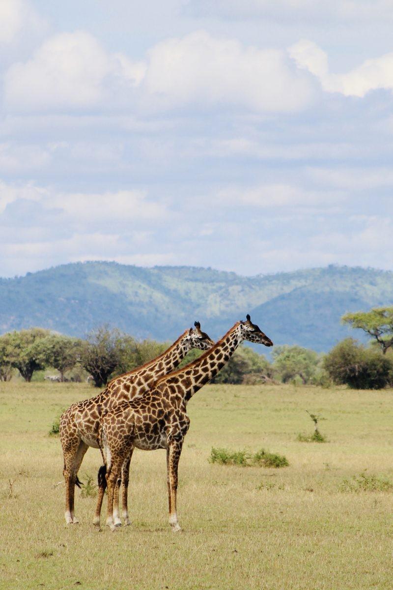 Hier kom je toch voor in Tanzania? Dieren! Foto: Pauline van der Waal