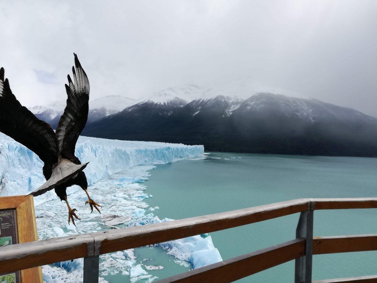 Zicht op de Perito Moreno