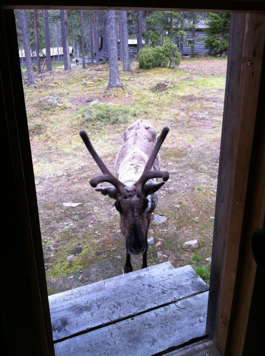 Uitzicht vanuit de Finse Sauna