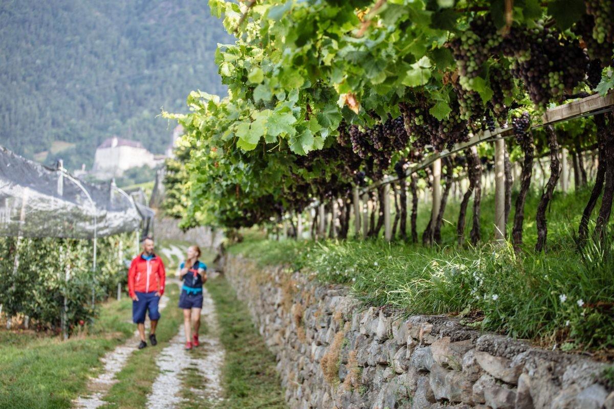 Wandelen tussen de wijnranken