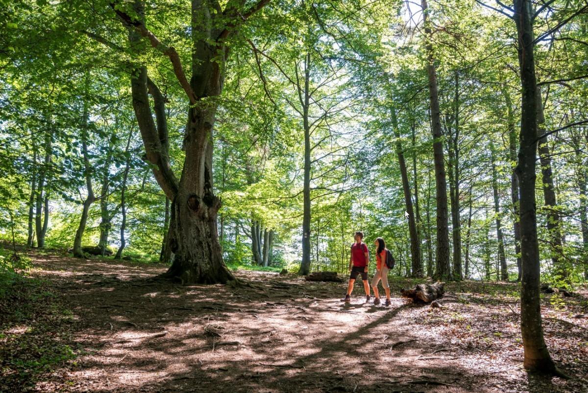 Wandelen door de bossen langs de Donau Foto: ©TMBW Lengler