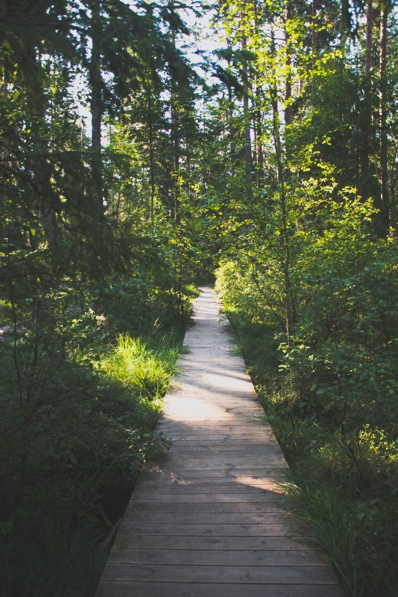 Wandelingen door het bos hebben vaak houten paden vanwege de veengrond.