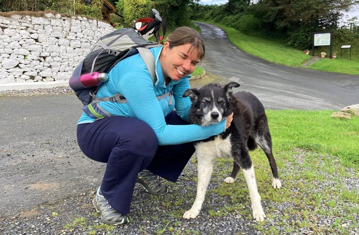 Een vriendelijke hond op de Wicklow Way in Ierland