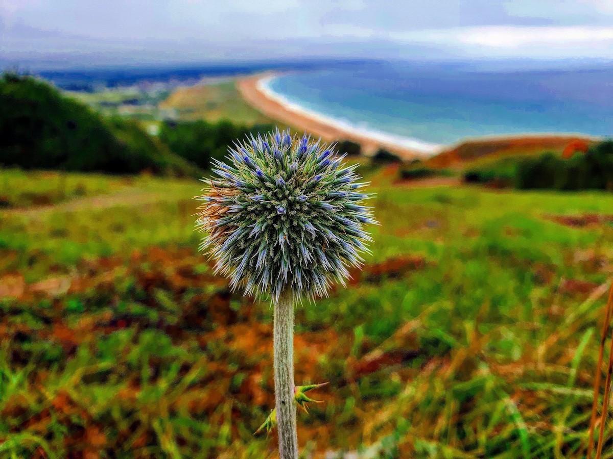 Wandelen op Cotentin 16