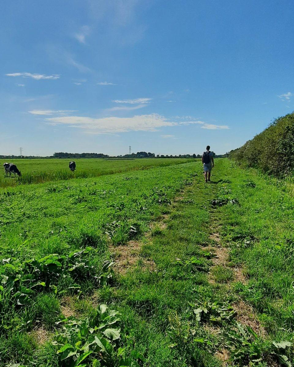 """Koeien op de """"Mantjeskade"""" Poldervaartroute"""