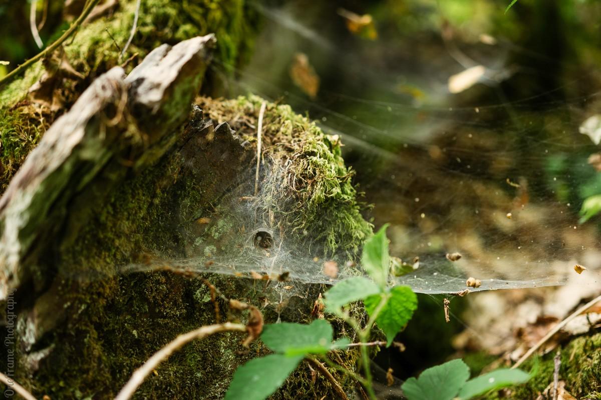 Spinnenweb Eifelsteig