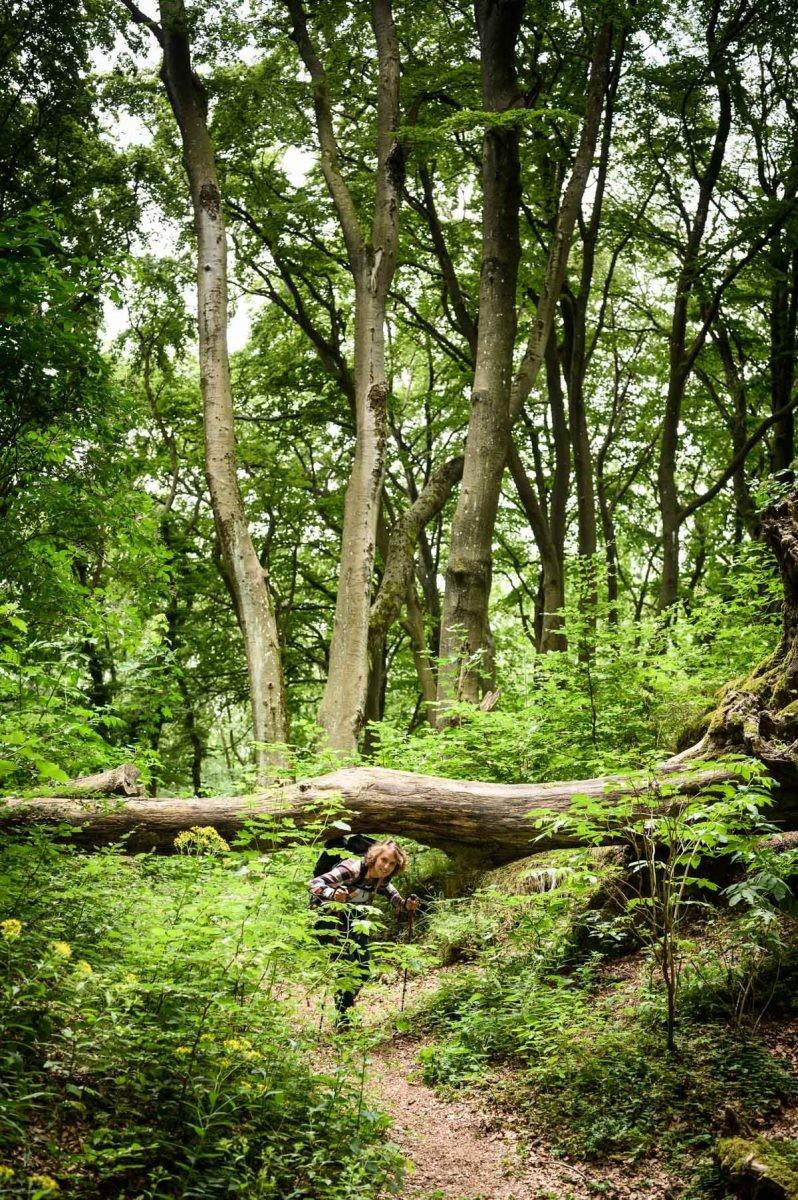 Onder omgevallen boom door
