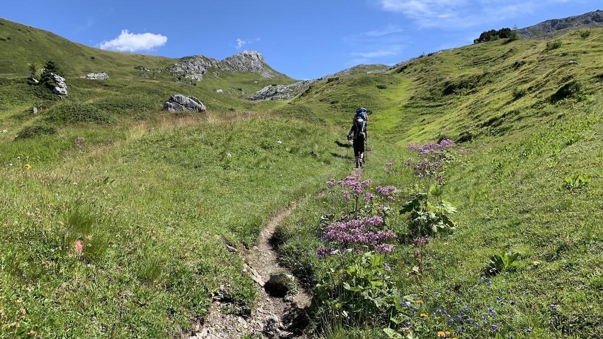 Bloemen op de Lechtaler Höhenweg