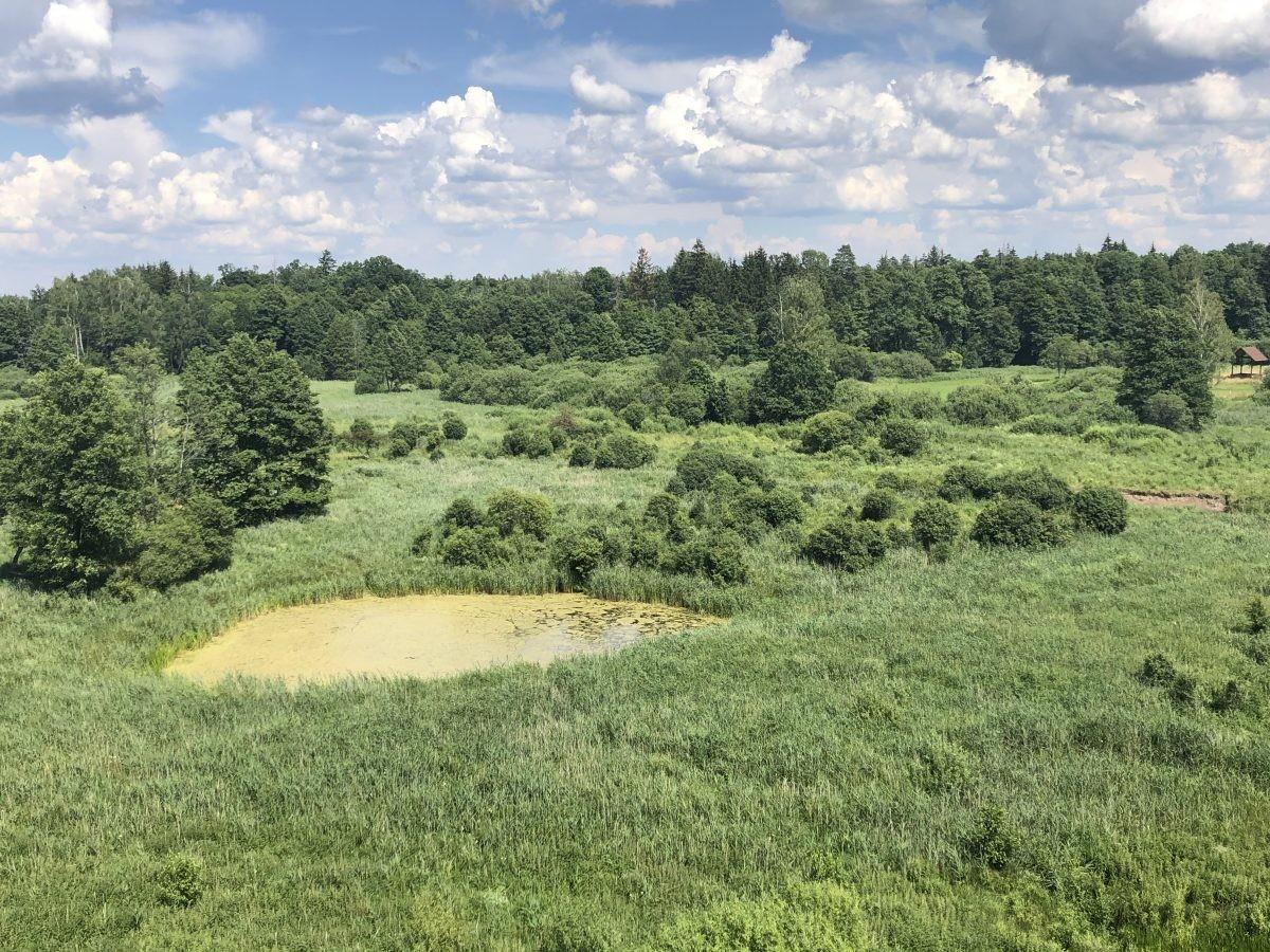Het leefgebied van de bizons in de oerbossen