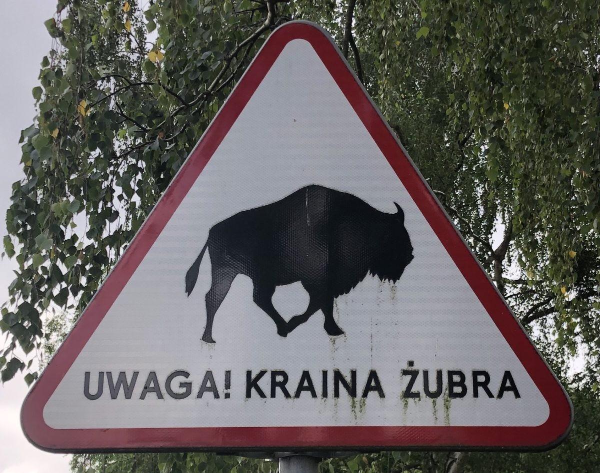 Attentie, land van de bizons