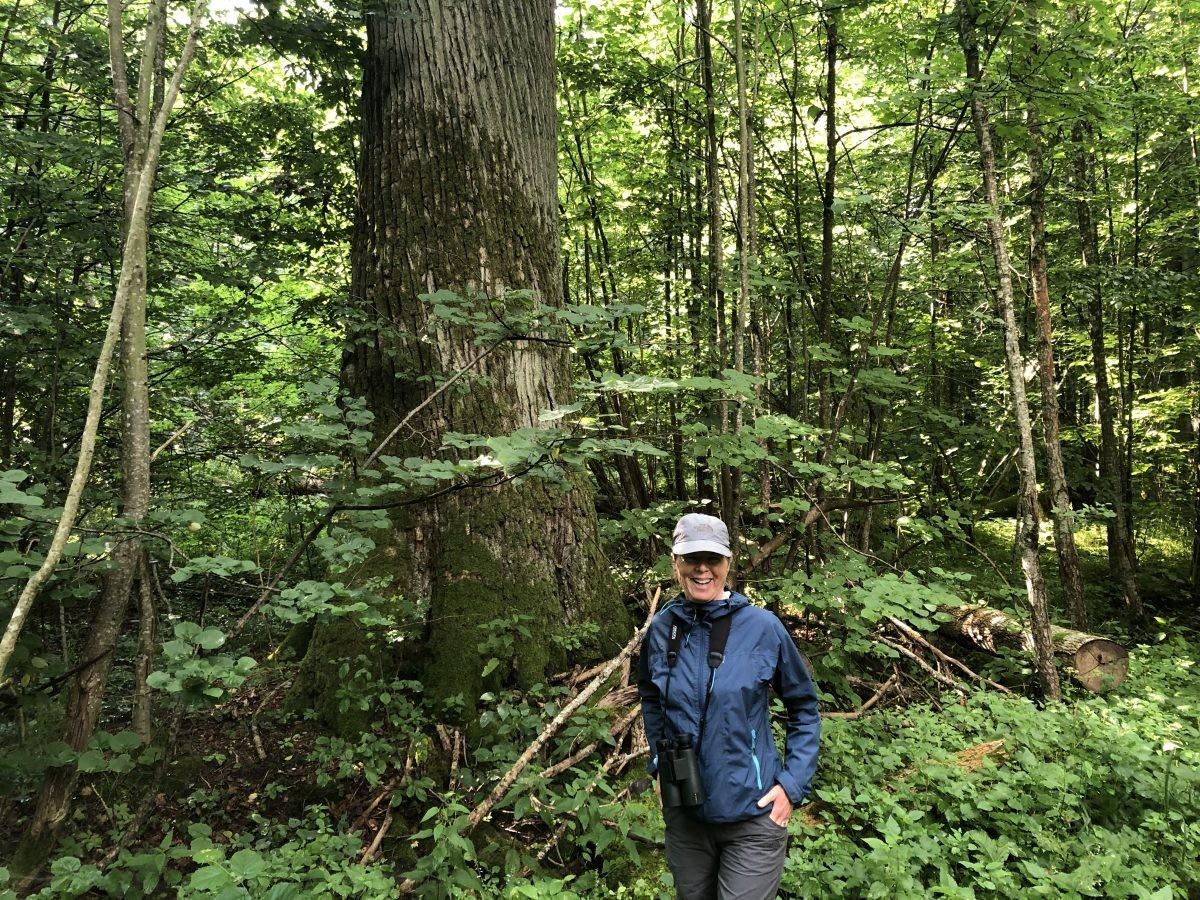 In de oerbossen van NP Bialowieska