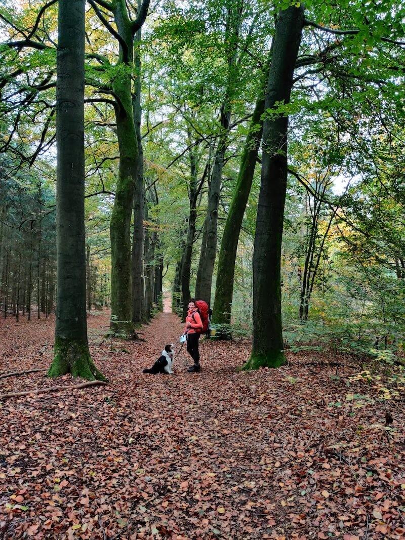 Lange beukenbomen dreef in het bos. Foto: Sietske Mensing