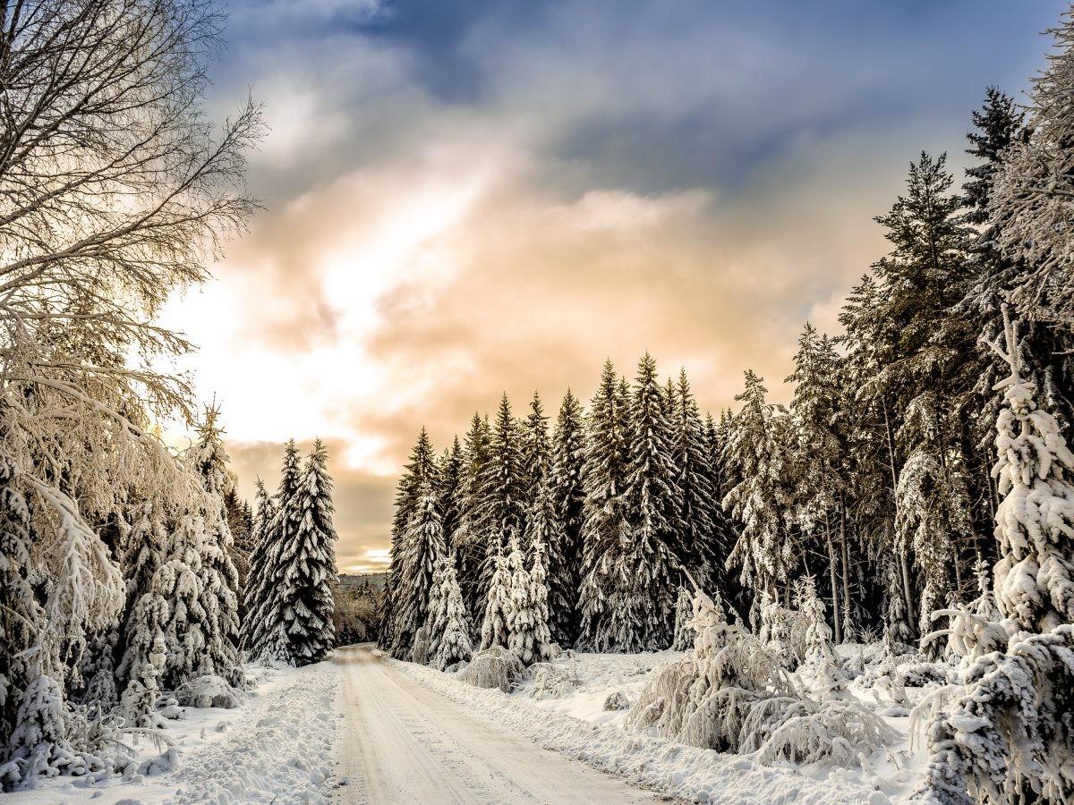 Reisadvies Zweden