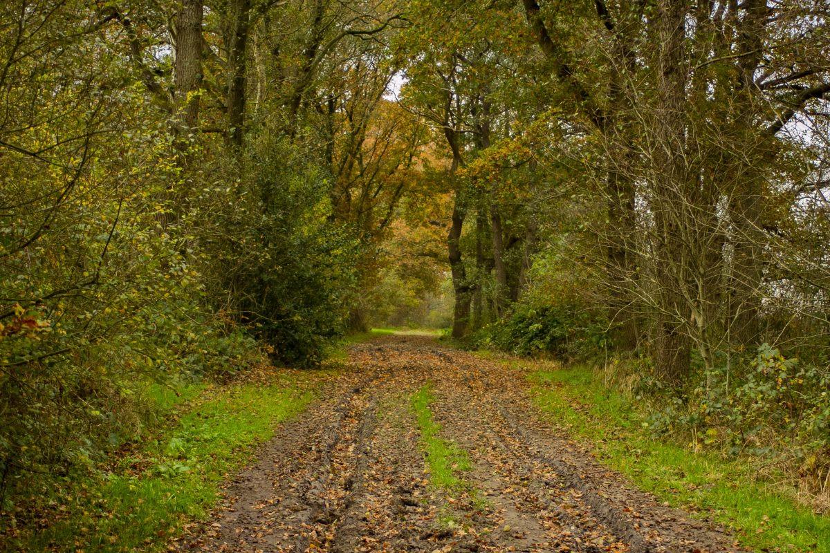 Het pad langs het Loonerdiep. Gelukkig kan de folkstone tegen een spatje modder