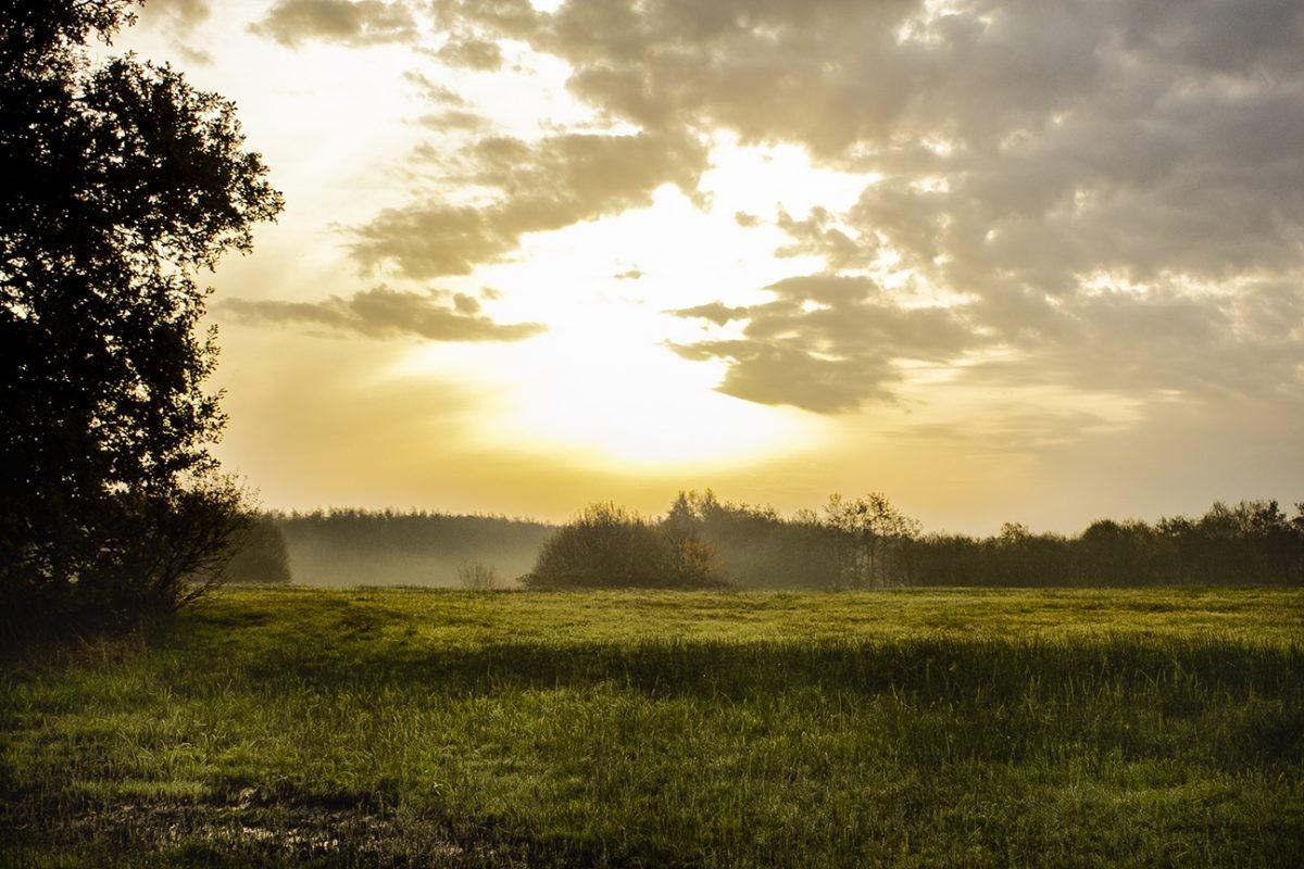De zon schijnt voorzichtig over het gebied van de Drentsche Aa