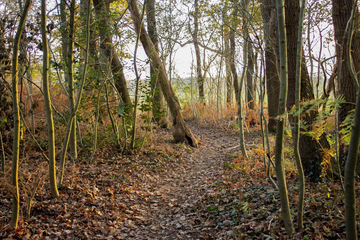 En zo sta ik ineens in een mooi herfstbosje