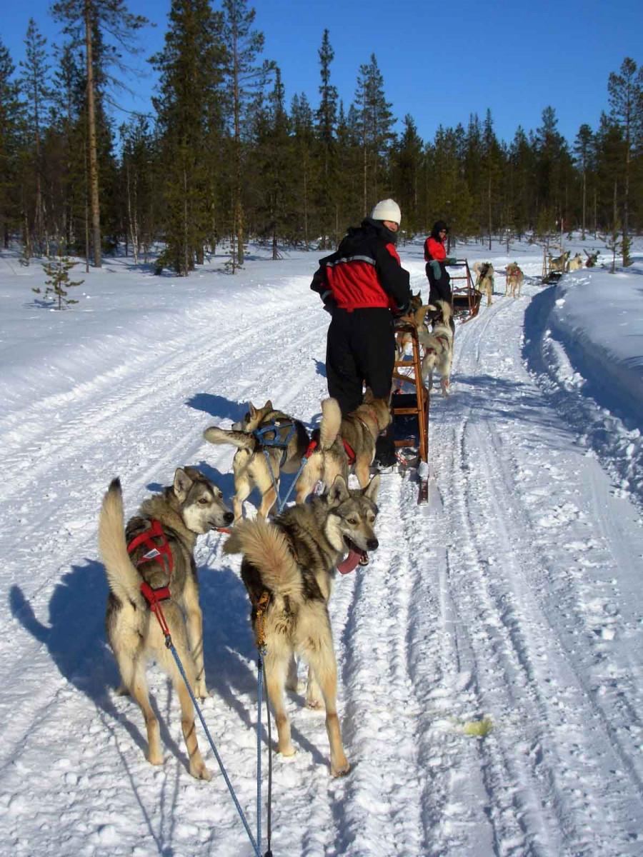 sledehonden tocht