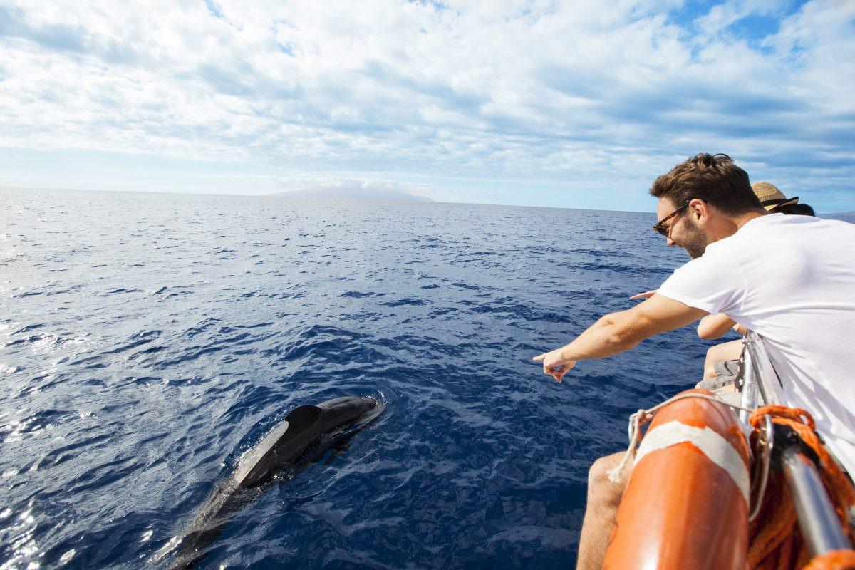 Op zoek naar dolfijnen. Copyright Turismo de Tenerife