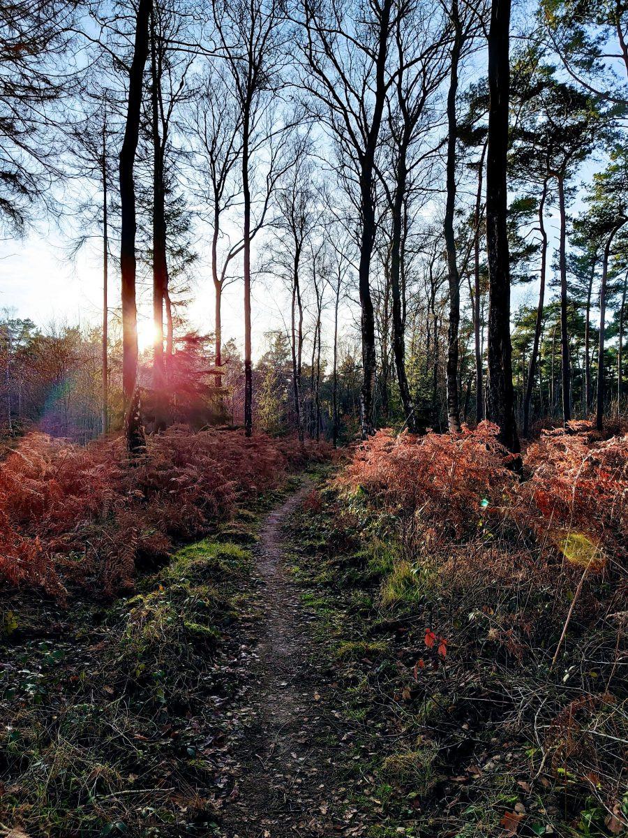 Door het Reichenwald met de ondergaande zon