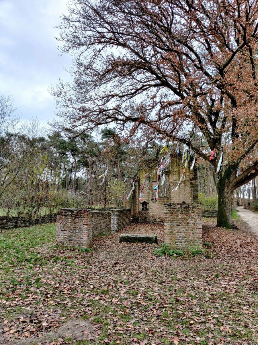 Koortsboom bij de ruine van de st. Walrickkapel