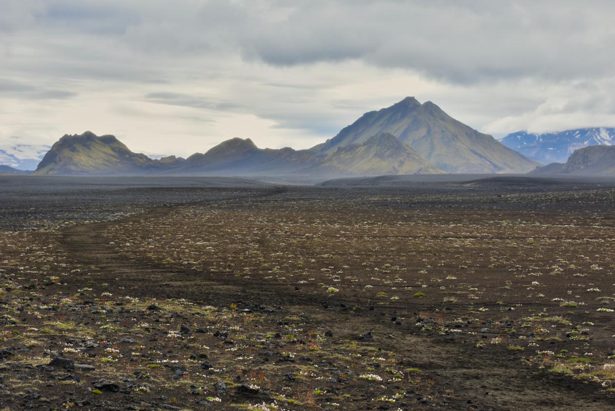 Laugavegur trail IJsland