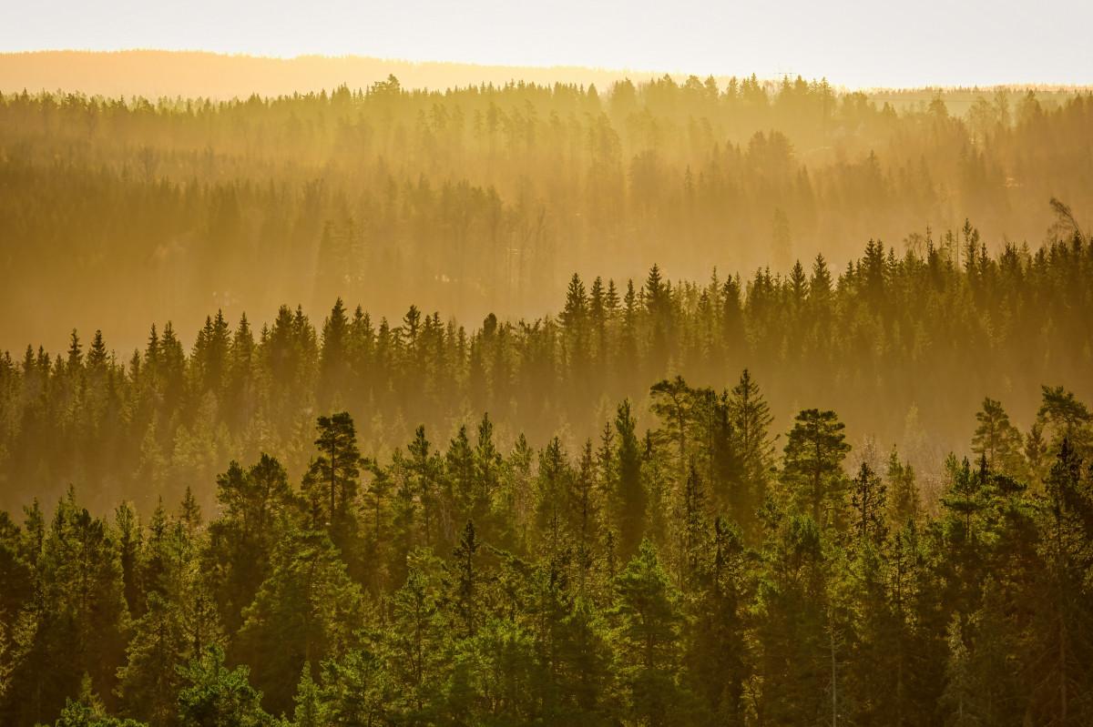 Natuurreservaat Uvaberget Tenhult