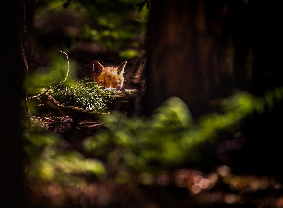 Copyrights: Hans Koster
