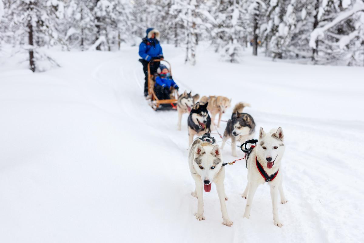 Glij door de sneeuw met alleen het geluid van blaffende husky's