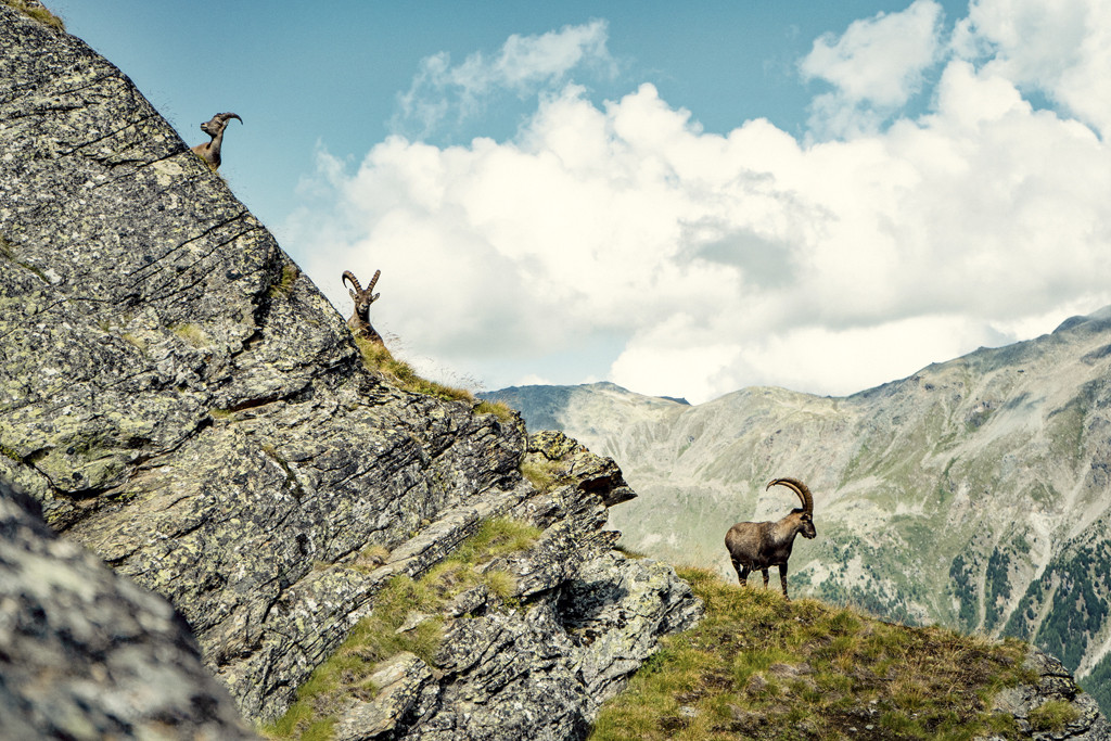 Spot je de steenbokken onderweg? Copyright: Zwitserland Toerisme/chrissie.st