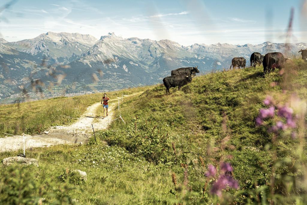 Ga op zoek naar de heilzame bloemen en kruiden van de Alpen. Copyright: Zwitserland Toerisme/Litescapemedia